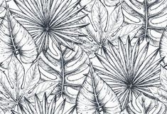 Vector seamless pattern with compositions of hand drawn tropical plants. Vector seamless pattern with compositions of hand drawn tropical flowers, palm leaves Royalty Free Stock Photos