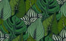 Vector seamless pattern with compositions of hand drawn tropical plants. Vector seamless pattern with compositions of hand drawn tropical palm leaves, jungle Stock Images