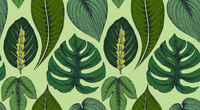 Vector seamless pattern with compositions of hand drawn tropical plants. Vector seamless pattern with compositions of hand drawn tropical palm leaves, jungle Stock Photography