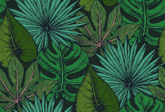 Vector seamless pattern with compositions of hand drawn tropical plants. Vector seamless pattern with compositions of hand drawn tropical palm leaves, jungle Royalty Free Stock Image