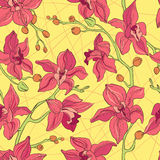 Vector Seamless Pattern consist of Orchids Stock Photos