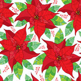 Vector seamless pattern with contour Poinsettia flower or Christmas Star in red and green leaves on the white background. Stock Photos