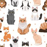 Vector seamless pattern of cute cats. Colored pictures of pets. Cat pet animal pattern background illustration Royalty Free Stock Image