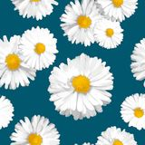 Seamless floral vector pattern with white daisies on navy blue background. Flowers in realistic style royalty free illustration