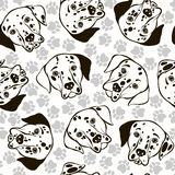Vector seamless pattern with Dalmatians and traces. Stock Image