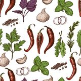 Vector seamless pattern with different color spices and herbs in sketch style. Vector illustration for your design royalty free illustration