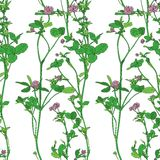Vector seamless pattern with drawing clovers. Wild flowers, hand drawn vector illustration Stock Image