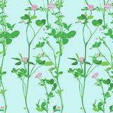Vector seamless pattern with drawing clovers. Wild flowers, hand drawn vector illustration Stock Photos