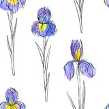 Vector seamless pattern with flowers of iris. Vector seamless pattern with drawing flowers of iris, floral background with watercolor spots, hand drawn royalty free illustration