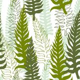 Vector seamless pattern with fern. Vector seamless pattern with green fern on white background Stock Photo