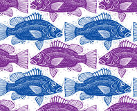 Vector seamless pattern with fishes, different species. Underwat Stock Photography