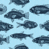 Vector seamless pattern with fishes, different species. Underwat Stock Images