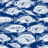 Vector seamless pattern with fishes, different species. Underwat Royalty Free Stock Photo