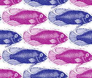 Vector seamless pattern with fishes, different species. Royalty Free Stock Image