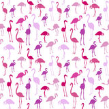 Vector seamless pattern with flamingo bird. Stock Images