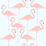 Vector seamless pattern with flamingos Royalty Free Stock Photos