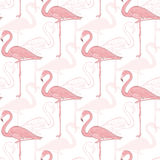 Vector seamless pattern with flamingos Stock Images