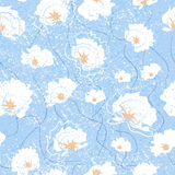 Vector seamless pattern with flowers of cotton. Illustration of floral background. Vector seamless pattern with flowers of cotton. Illustration of floral Stock Photography