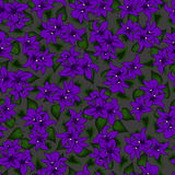 seamless pattern flowers violet  Stock Photos