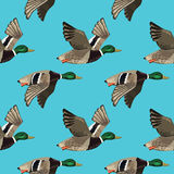Vector seamless pattern with flying ducks Stock Photography