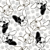 Vector seamless pattern with French Bulldog and traces. Royalty Free Stock Images