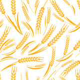 Vector seamless pattern with golden ripe ear of wheat. Stock Photos