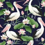 Vector seamless pattern with graceful pelicans. Beautiful design elements, perfect for prints and patterns Stock Photography