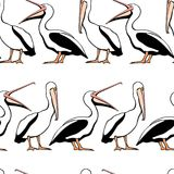 Pelicans seamless pattern. Vector seamless pattern with graceful pelicans.  Beautiful design elements, perfect for prints and patterns Royalty Free Stock Photos