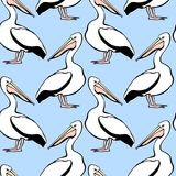 Pelicans seamless pattern. Vector seamless pattern with graceful pelicans.  Beautiful design elements, perfect for prints and patterns Royalty Free Stock Photography