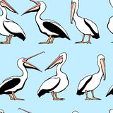 Pelicans seamless pattern. Vector seamless pattern with graceful pelicans on blue background.  Beautiful design elements, perfect for prints and patterns Stock Photos