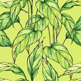 Vector seamless pattern with green leaves on green background Stock Images