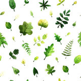 Vector seamless pattern with green leaves painted with watercolors on white background. Stock Image