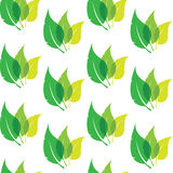 Vector seamless pattern with green leaves on white background. Royalty Free Stock Photos