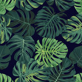 Vector seamless pattern with green monstera palm leaves on dark background. Summer tropical fabric design. Royalty Free Stock Images