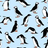 Northern see birds pattern Stock Photos