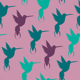 Vector seamless pattern with hand drawn decorative doodle hummingbird illustrations. Stock Photography