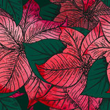 Vector seamless pattern with Hand drawn decorative poinsettia fl Stock Images