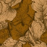 Vector seamless pattern with hand drawn dry autumn leaves. Stock Images
