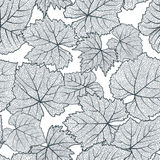 Vector seamless pattern with hand drawn grape textured leaves. Black and white autumn nature background. Stock Images