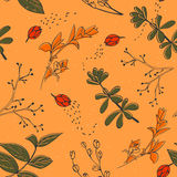 Vector seamless pattern with hand drawn herbs. Background in orange, red, green and yellow colours Stock Photos