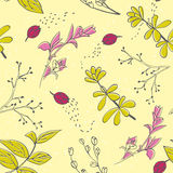 Vector seamless pattern with hand drawn herbs. Spring and summer background. Vector seamless pattern with hand drawn herbs. Background in yellow, pink and green Royalty Free Stock Photos
