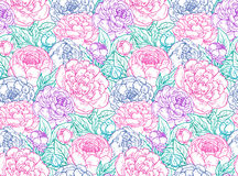 Vector seamless pattern with hand drawn peony flowers. Stock Images