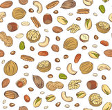 Vector seamless pattern hand sketched nuts on white background in hand drawn style: hazelnut, almonds, peanuts, walnut, cashew Royalty Free Stock Images