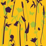 Vector seamless pattern with herbs Royalty Free Stock Image