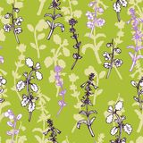 Vector seamless pattern with herbs Stock Image