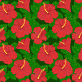 Vector seamless pattern with hibiscus Stock Image