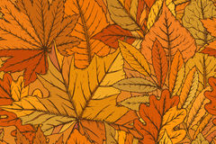 Vector seamless pattern with highly detailed hand drawn leaves. Stock Images