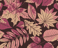 Vector seamless pattern with highly detailed hand drawn leaves Stock Image