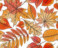 Vector seamless pattern with highly detailed hand drawn leaves. Royalty Free Stock Photos