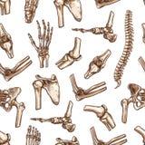 Vector seamless pattern human body bones sketch. Human joints and body parts bones seamless pattern. Vector sketch spine pelvis, leg knee or shoulder scapula and vector illustration